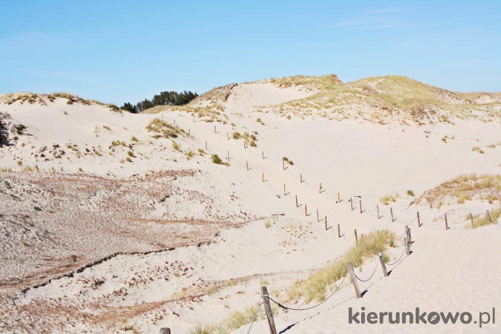 wydma czołpińska i larania morska w Czołpinie