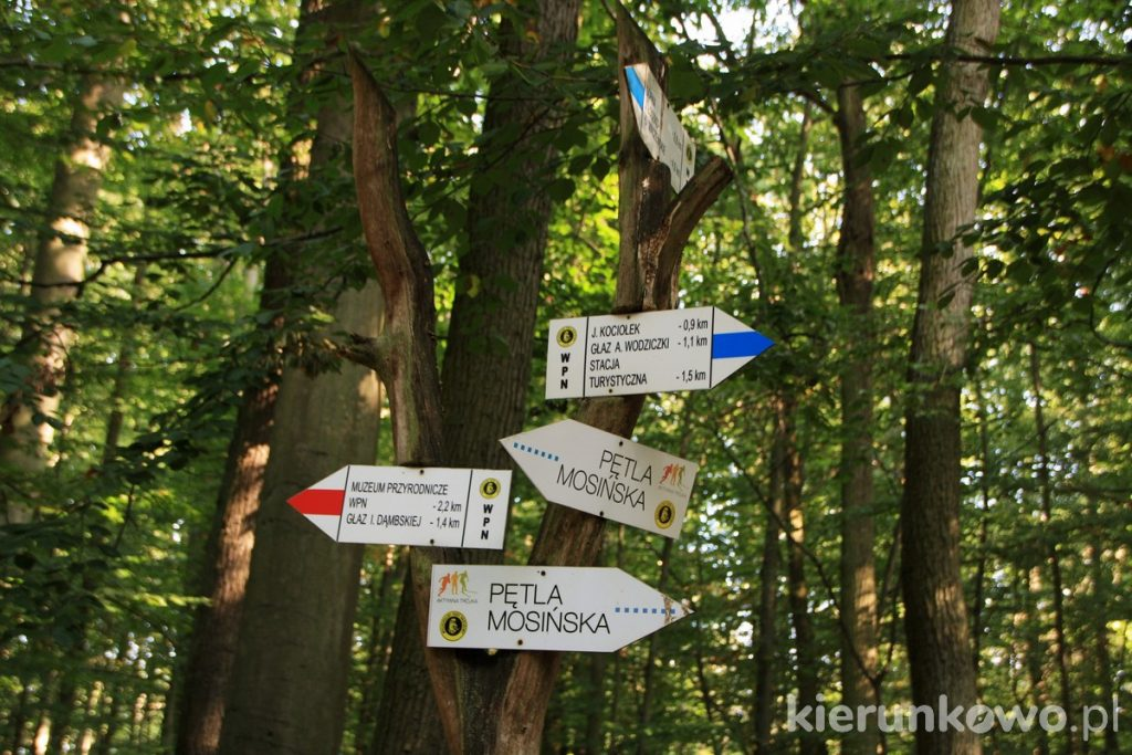 wielkopolski park narodowy podsumowanie 2020