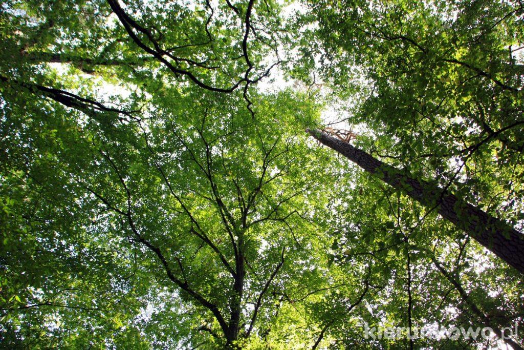 grabina wielkopolski park narodowy