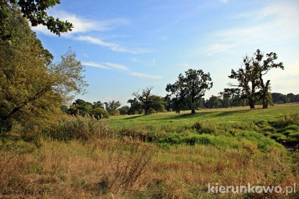rogaliński park krajobrazowy rogalin co warto zobaczyć