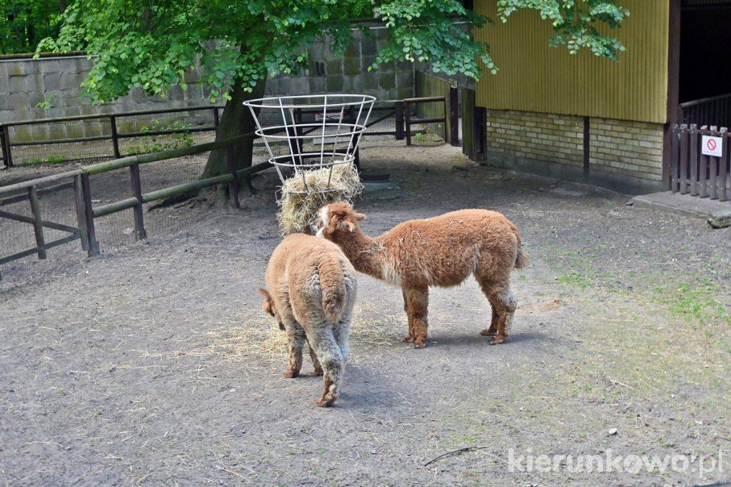 nowe zoo w poznaniu zoo poznań ogróf zoologiczny w poznaniu